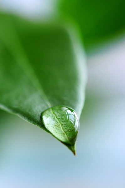 Leaf with a water droplet
